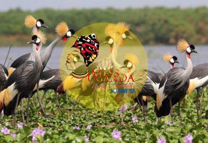 Miss Uganda North America to Promote Tourism